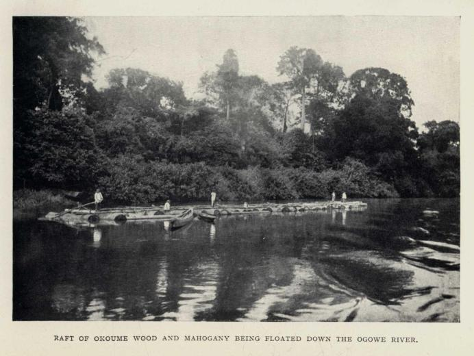 RAFT OF OKOUME WOOD AND MAHOGANY BEING FLOATED DOWN THE OGOWE RIVER.