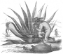 etext:b:brantz-mayer-mexico-aztec-vol-2-illus-058_sml.jpg