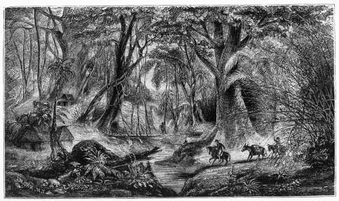 MEXICAN FOREST SCENE.
