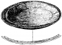 etext:f:frank-hamilton-cushing-a-study-of-pueblo-pottery-fig501.png
