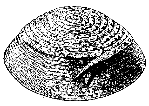 Fig. 524