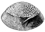 etext:f:frank-hamilton-cushing-a-study-of-pueblo-pottery-fig524.png