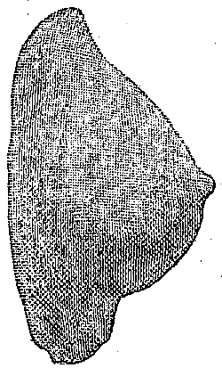 Fig. 548