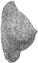 etext:f:frank-hamilton-cushing-a-study-of-pueblo-pottery-fig548.png