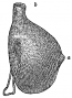 etext:f:frank-hamilton-cushing-a-study-of-pueblo-pottery-fig549.png