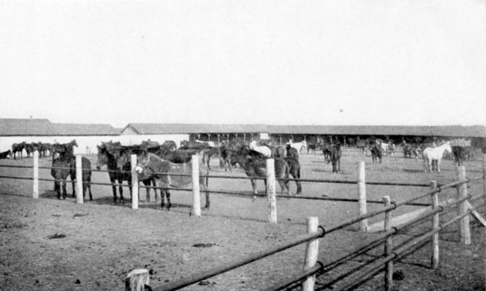 Work Stock in Apache Corral