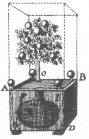 """Diagram of the orange-tree trick, from Wiegleb's """"The Natural Magic,"""" published in 1794."""