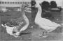 etext:h:harry-m-lamon-ducks-and-geese-fig51.jpg