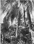 etext:j:james-meade-adams-pioneering-in-cuba-ill_p_085.jpg