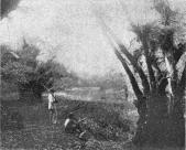 Scene on Laguna Grande.
