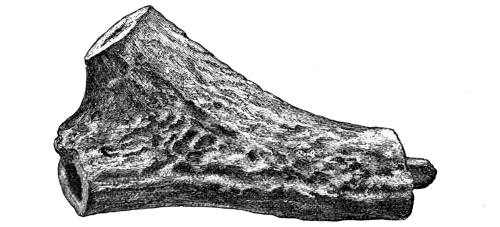 Fig. 222.—Implement of Deer-horn from Broch of Lingrow (4¼ inches in length).