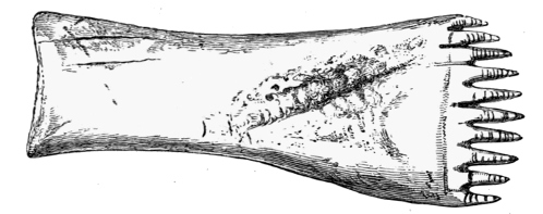 Fig. 237.—Long-handled Comb from the Broch of Burrian, Orkney (4¾ inches in length).