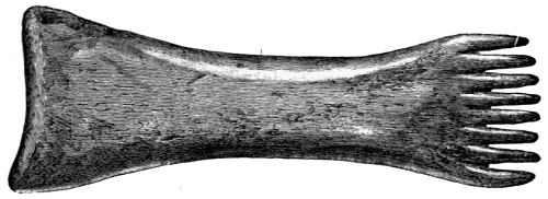 Fig. 238.—Long-handled Comb from the Broch of Burrian (4¼ inches in length).