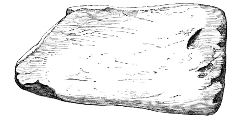 Fig. 240.—One of a number of Smoothing Implements of Bone from the Broch of Burrian (6½ inches in length).