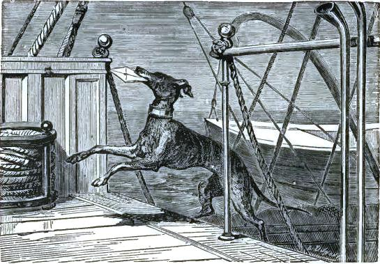 The dog-captain carrying a letter