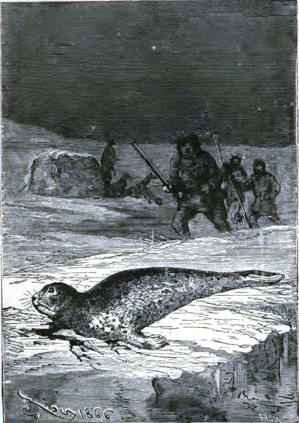 The doctor was fortunate enough to find a seal