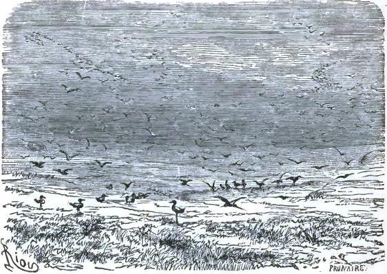 The many birds of spring