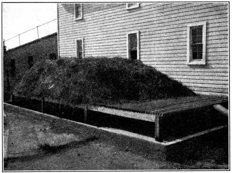 Fig. 9.--A maggot trap for house-fly control. View showing the concrete basin containing water in which larvæ are drowned, and the wooden platform on which manure is heaped. (Hutchison.)