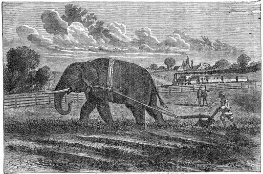 ELEPHANTINE AGRICULTURE.