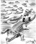 etext:r:ruth-stiles-gannett-my-fathers-dragon-image_038.jpg