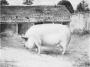 etext:s:sanders-spencer-the-pigs-imagep096_0001.jpg