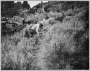 etext:s:stanley-young-hints-on-bobcat-trapping-page_2.png