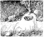 etext:s:stanley-young-hints-on-bobcat-trapping-page_5.png