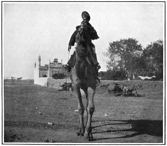A Cavalry Shutur-sowar, or Camel-rider