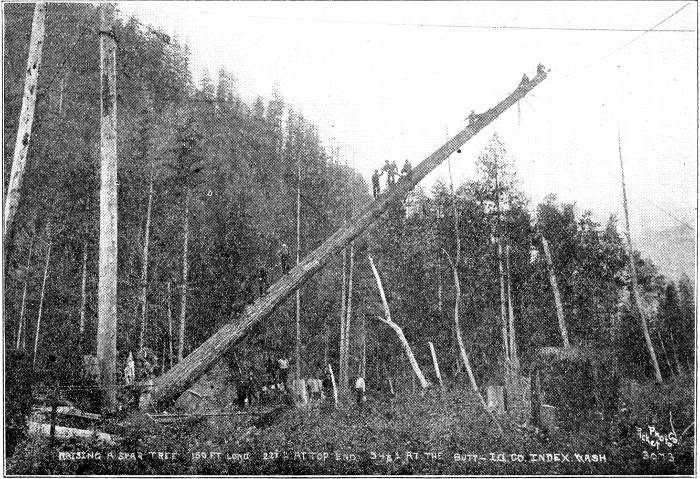 An all-I. W. W. crew raising a spar tree 160 ft. long, 22-1/2; inches at top and 54-1/2; inches at butt, at Index, Wash.