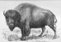 etext:w:william-hornaday-extermination-american-bison-007.jpg