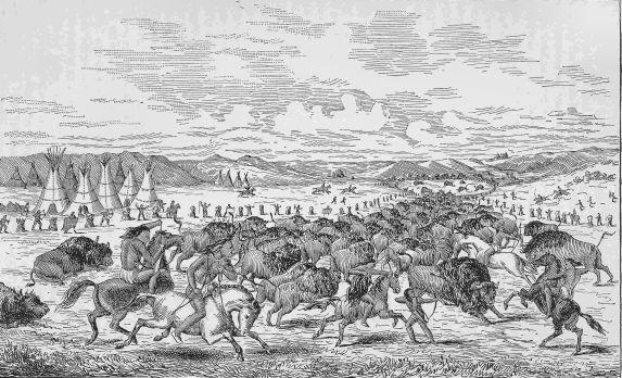 CREE INDIANS IMPOUNDING BUFFALOES.