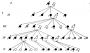 etext:w:william-kellicott-social-direction-of-human-evolution-fig20.png