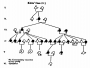 etext:w:william-kellicott-social-direction-of-human-evolution-fig24.png