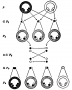 etext:w:william-kellicott-social-direction-of-human-evolution-fig9.png