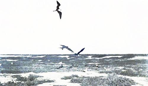 SUGGESTIVE OF A WILD, WIND-SWEPT ISLAND OF THE SEA