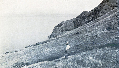 THE WILD OATS SLOPE OF CLEMENTE