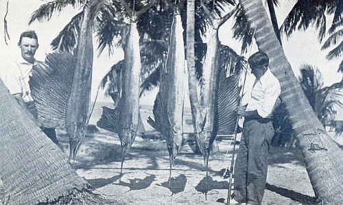 FOUR SAILFISH IN ONE DAY ON LIGHT TACKLE