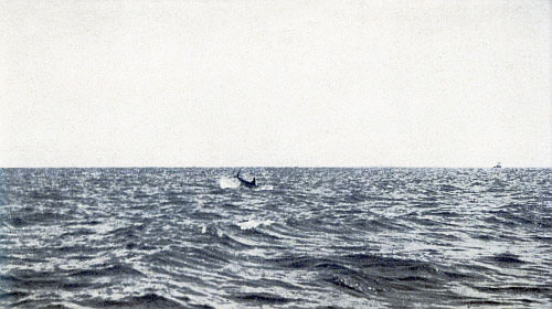 THE ONLY PHOTOGRAPH EVER TAKEN OF LEAPING BROADBILL SWORDFISH