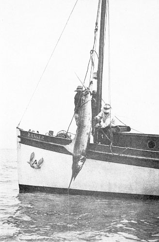 HAULED ABOARD WITH BLOCK AND TACKLE