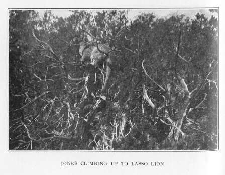 Jones Climbing up to Lasso Lion