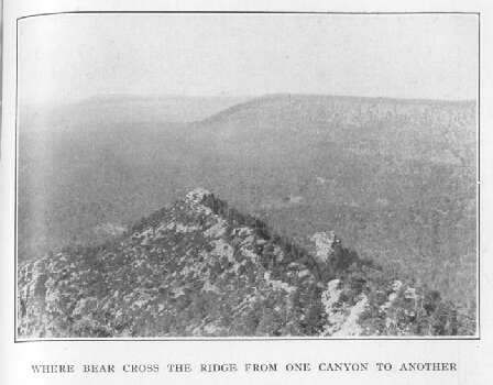 Where Bear Cross the Ridge from One Canyon to Another