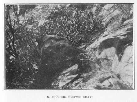 R.C.'s Big Brown Bear
