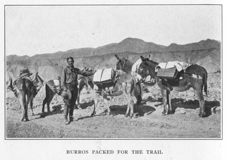 Burros Packed for the Trail