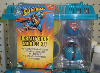 Superman Hermit Crab