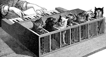 Cat Organ Illustration