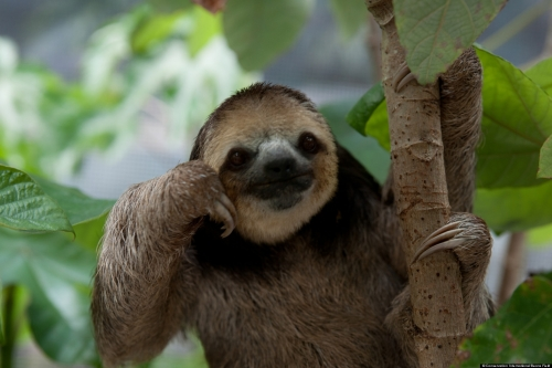 The Thinking Man's Sloth