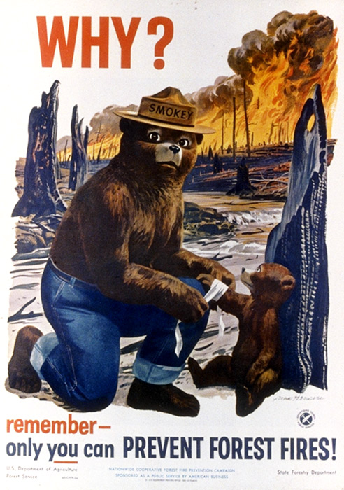 1953 Smokey The Bear Poster: Why?