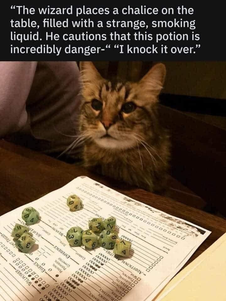 A Cat Plays Dungeons & Dragons