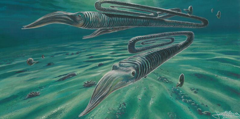 Artist's depiction of Diplomoceras maximum