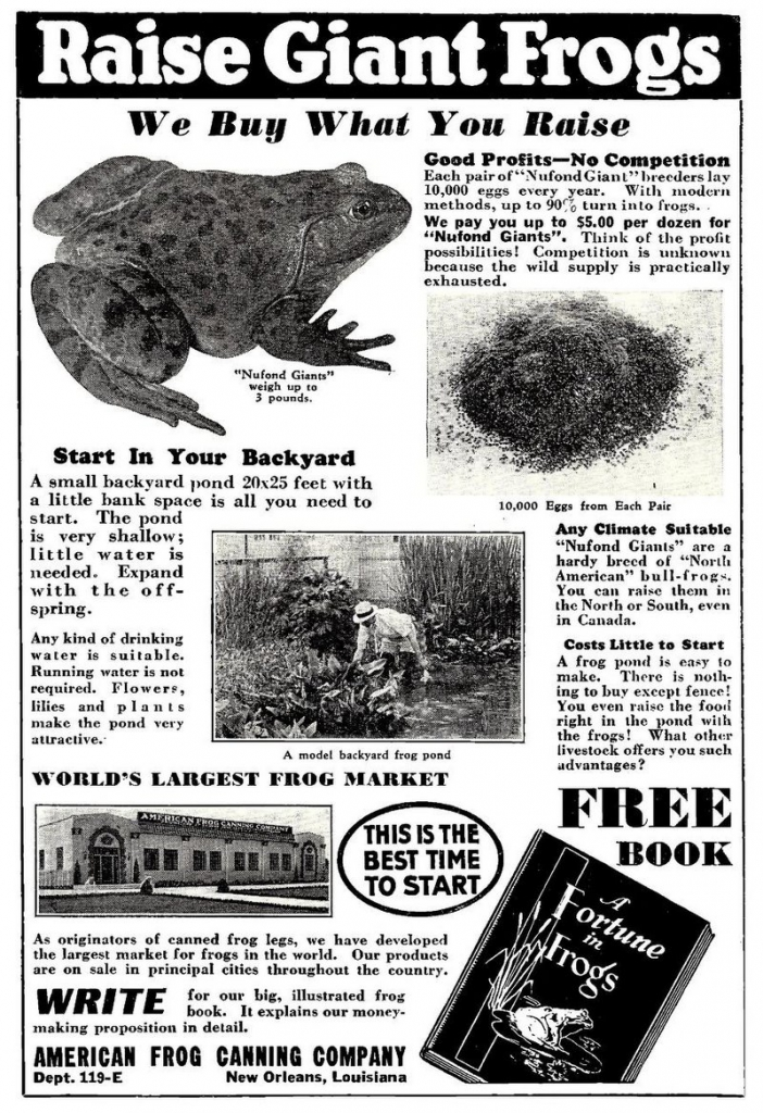 Ad: Raise Giant Frogs, 1936